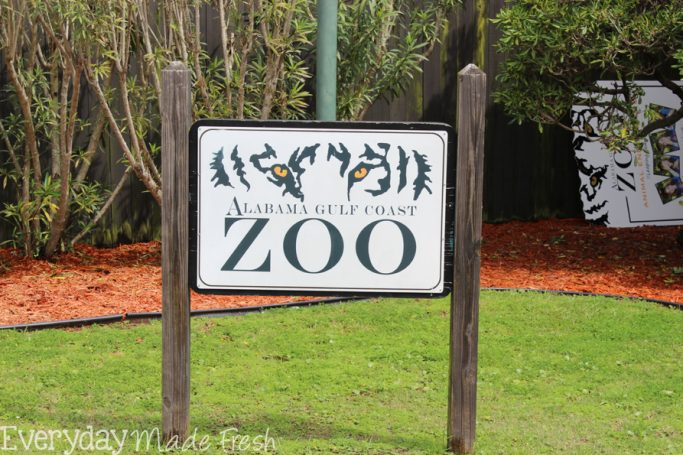 Alabama Gulf Coast Zoo, Gulf Shores Alabama | EverydayMadeFresh.com