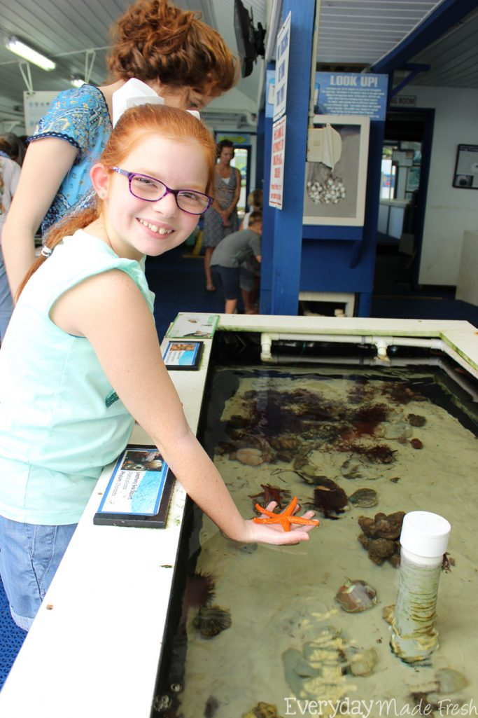 Gulf Specimen Marine Lab in Panacea Florida is the place to go for those that love ocean life! | EverydayMadeFresh.com